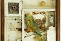 Assemblage / by Harriet Swindell