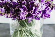 Bloemen / Huis tuin