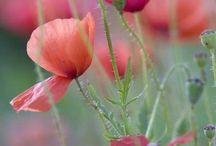 Mes fleurs préférées ⭐️
