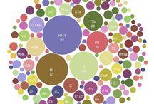 mtDNA H1c1 / H1c1 mtDNA