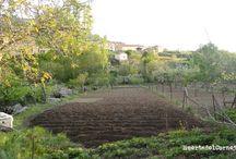 Preparación de una huerta / Labores que debemos realizar y para preparar el terreno para los nuevos cultivos.