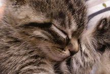 CatsLove
