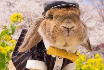 Pui bunny
