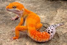LIZARDS AND SNAKES N' STUFF I LOVE THEM YOU DONT UNDERSTAND OK THEY ARE BEST JUST LIKE BIRD AND DOG AND CAT I LOVE THEM / SNEKS YISssssss