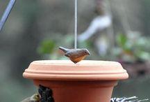 DIY Bird Feeders/Waterers