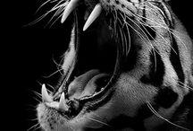 Fotografi - dyr