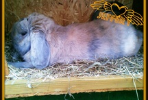 My Rabbit, Jeffery!