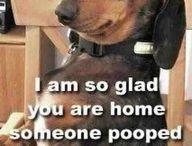 funny dog's
