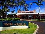Things to do near the Diamond Head Luau. / Here are our Top things to do near the Diamond Head Luau. Our local business neighbors are important to us and we hope you enjoy them as much as we do! #Oahu #DiamondHeadBeachLuau #Waikiki #Hawaii #Luau #WaikikiAquarium #HonoluluZoo #DiamondHead #KapiolaniPark #WaikikiBeach