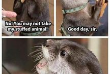 Animals memes