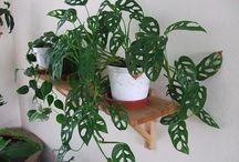 Plants/floral