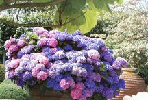 My secrete garden