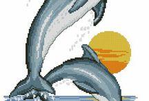 delfin minták