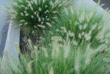 Tuin aanplanting