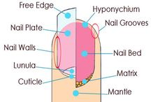 Nails, Nail Growth, Nail Biting and More!