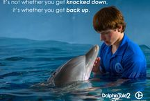 Dolphin tale 1 & 2 quotes / BEST MOVIE EVER