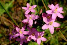 Lesni kvety