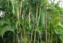Plants I Want