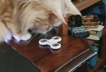 cat and the spinner