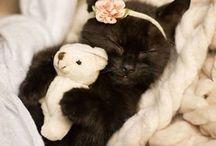 Macskák / Macskák