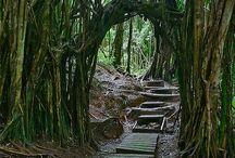 Hiking spots / by Shanna Kobayashi