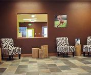 Wag Resort / Check out Wag Resort, we have deigned our facility with your dog in mind!