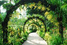 Jardines y Caminos