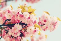 Favorite Florals / Flowers and florals / by Adelle McElveen
