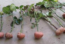 Nápady na pestovenie