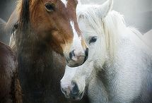 The spirit of the horse sanctuary / Horses are more than an animals.