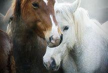 Horses / by Lynn Ingram