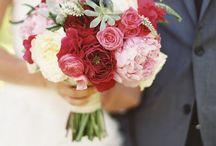 {Elvi} Blooms