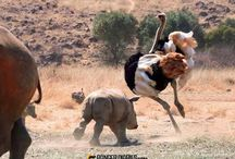 A Crash of Rhino Movie / Independent Filmmaking