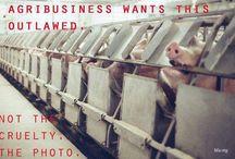 Activism / by Animals Voice