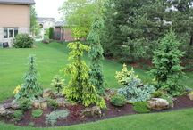 Front yard / Spring ce