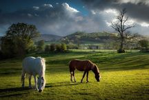 Brecon Beacons Photography / Showcasing the photographers of the Brecon Beacons. Come stay at Aberyscir Coach House and enjoy the sites yourself.