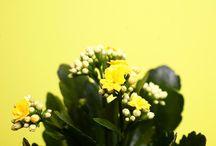 Blooming Bunnik Plants / Blooming plants from Bunnik Plants