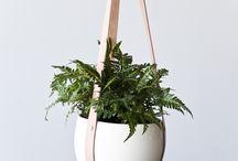 Indoors plants