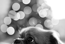 Photography: Animals / by Maria Lindgren