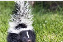 Skunk Smell Remover