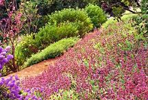 DROUGHT RESISTANT LANDSCAPES & PLANTS