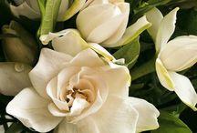Розы и гардении