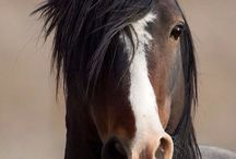 Nature - Animals - Horses
