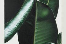 botany wild / plants