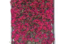 Enredaderas / jardin vertical