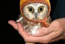 Liltle OWL