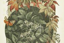 изображение растений