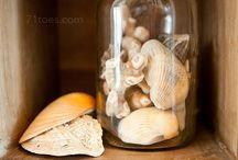 Sea Shells / Seasons
