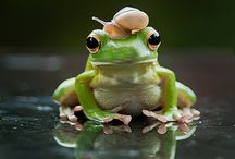Animals   ( Frogs and lizards )