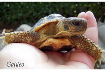 Tortoises and turtles  / a tribute to these lovely reptiles (I am mommy of 11 tortoises)